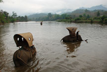 Ride an elephant in Luang Prabang, Laos