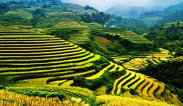 Mu Cang Chai - Sapa: best time to travel